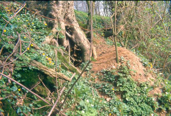 Badger' s burrow (Hohnbachtal, La Calamine,Belgium)