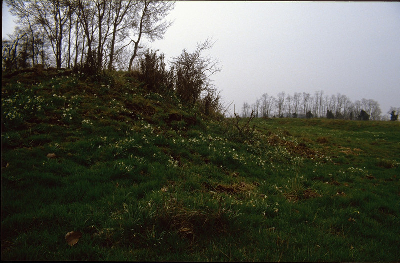meadow with Galanthus nivalis