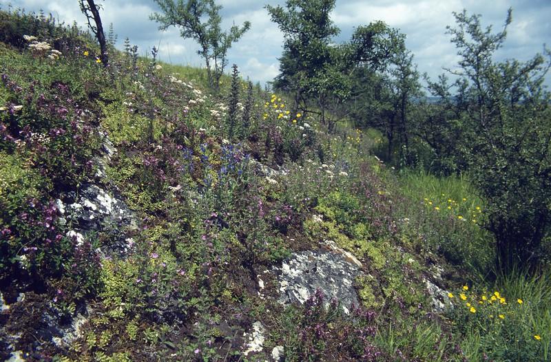 habitat Tienne (limestone)