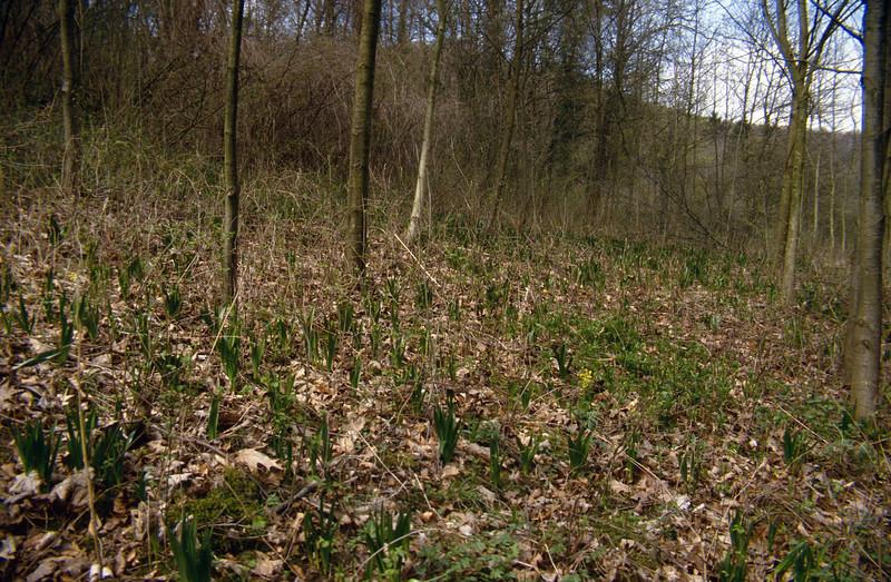 Colchicum autumnale, habitat