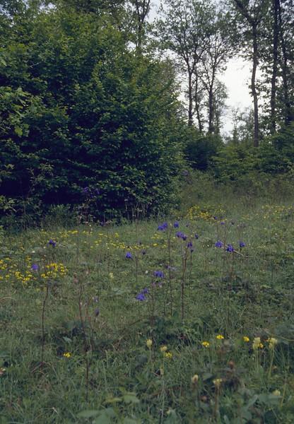 Aquilegia vulgaris, habitat
