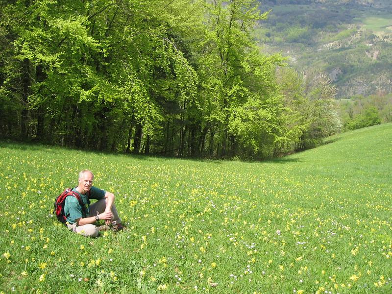 meadows with Primula veris (Vercors)