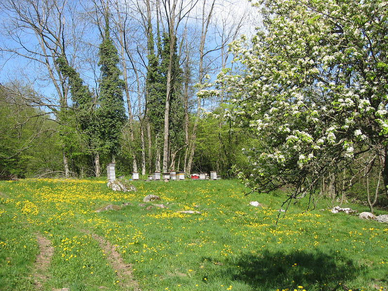 meadow with beehives