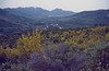 Ulex parviflorus, landscape, the mountains of Corsica
