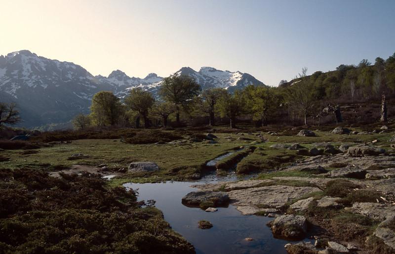 landscape near bergerie du Vaccaghie 1621m with Fagus sylvatica