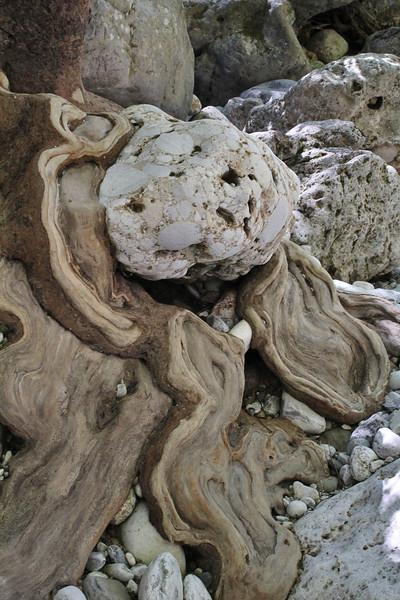 Tree-trunk of Platanus orientalis, Mili Gorge, N of Kambos,  Kalathio mountains, Mani,
