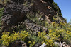 Colutea arborescens, Kalavrita-Diakofto (Gulf of Corinth)