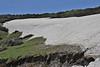melting snow area with Crocus sieberi  ssp. sublimis, Mount Helmos 2341m, SE of Kalavrita