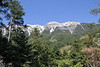 Abies cephalonica and Pinus nigra ssp. pallasiana, Trailhead near M.Panagias-Profitis Ilisa 2407m highest summit, Taigetos mountains v.v. (SW of Sparti)