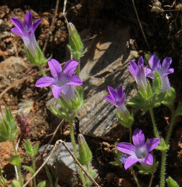 1, Mili Gorge, N of Kambos,  Kalathio mountains, Mani,