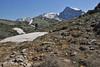 Crocus olivieri and some Crocus sieberi ssp. sublimis, Mount Helmos (Chelmos) 2341m