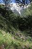 Cyclamen peloponnesiacum ssp. peloponnesiacum, Trailhead near M. Panagias-Profitis Ilisa 2407m highest summit, Taigetos mountains v.v. (SW of Sparti)