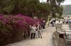 Bougainvillea glabra (Knossos)