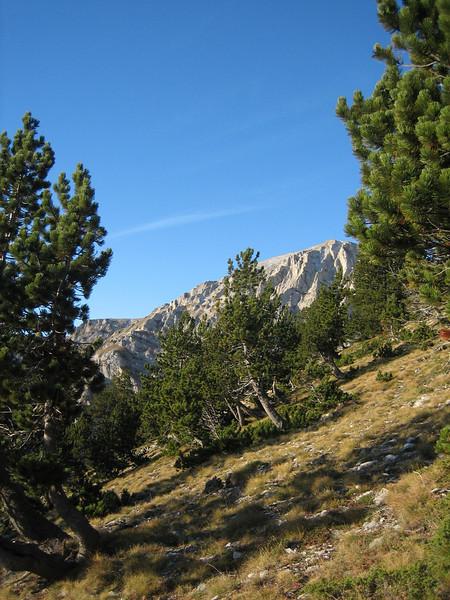 Habitat of Pinus heldreichii (Griekse den)
