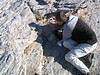 Saxifraga spruneri (Mount Olympus > 2000m.)