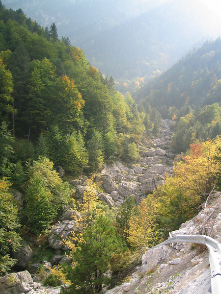 autumn coloured forest (Between Litochoro and Prionia at the foot of Mount Olympus)