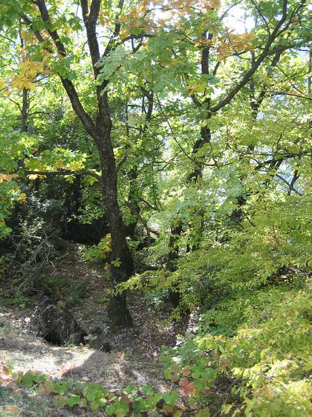 habitat of Cyclamen hederifolium ssp. hederifolium (near Meteora monasteries)