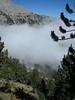 Habitat of Pinus heldreichii (NL: Griekse den) Mount Olympus National Park