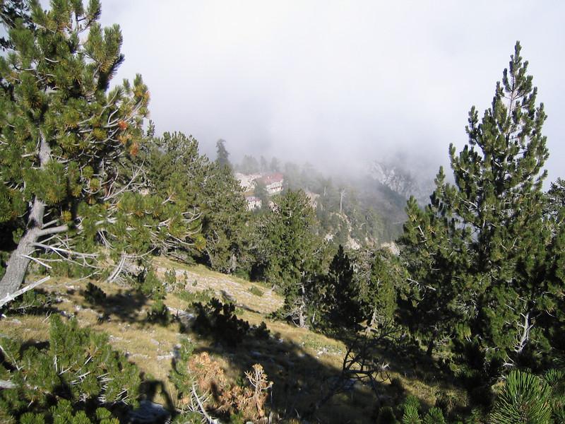 Habitat of Pinus heldreichii (NL: Griekse den)