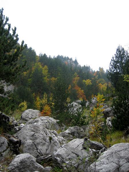 Jankaea heldreichii (Habitat between Refuge A and Prionia, Mount Olympus)