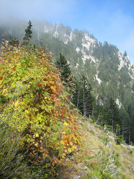 Habitat with Sorbus aucuparia (NL: Lijsterbes)(between Refuge A and Prionia, Mount Olympus)