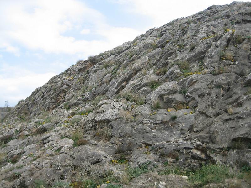 Habitat of Heliotropium europaeum (Europese heliotroop)(near Kastri, between Agia and Volos)