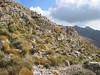 Arenaria cretica