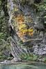 Lichen, Enipeas river, 950m, beneath Agios Dionysios  Monastery, Olympic NP