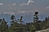 Abies cephalonica, Parnassos 2457m