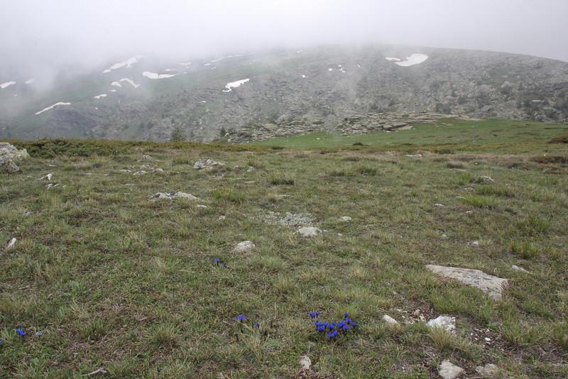 Gentiana verna ssp. balcanica, 2000m., Kajmaktcalan, 2521m, near the Macedonian border (L)