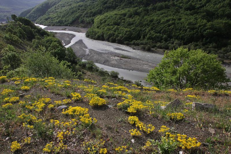 Alyssum spec., Perdalofos, Konitsa-Siatista (H)