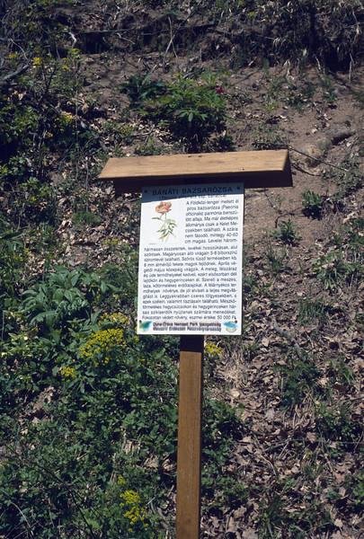 habitat of Paeonia officinalis ssp. banatica (Nature reserve Kelet-Mecsek)