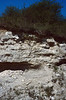 holes of bee-eaters (Nature Area Lovaszheteny in Kelet-Mescek)