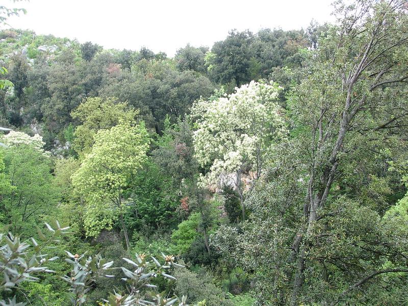 habitat of Fraxinus ornus (NL: pluim-of bloem-es)