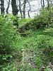 Cyclamen repandum (habitat, shadow)