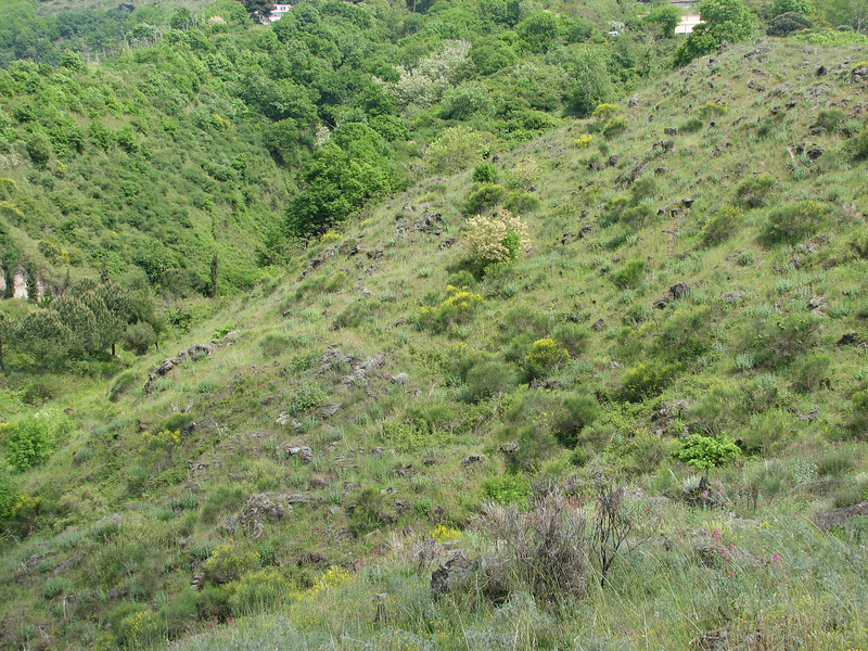 Habitat on hills of solid lava flow  (Vesuvius, vulcano)