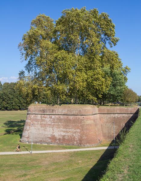 Walls, habitat of Dianthus spec