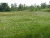 habitat of Dactylorhiza maculata (Korenburgerveen, Winterswijk)
