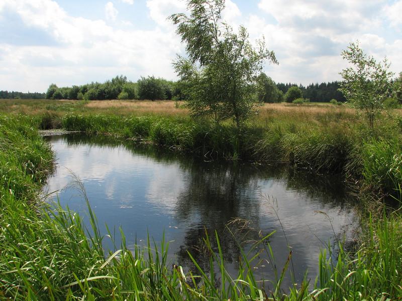 pool (Leender forest near the abbey of Achel)