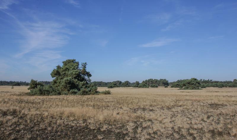 Woods and heathland