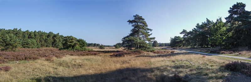Woods and heathland