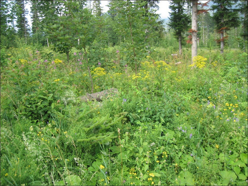 Biotope forest