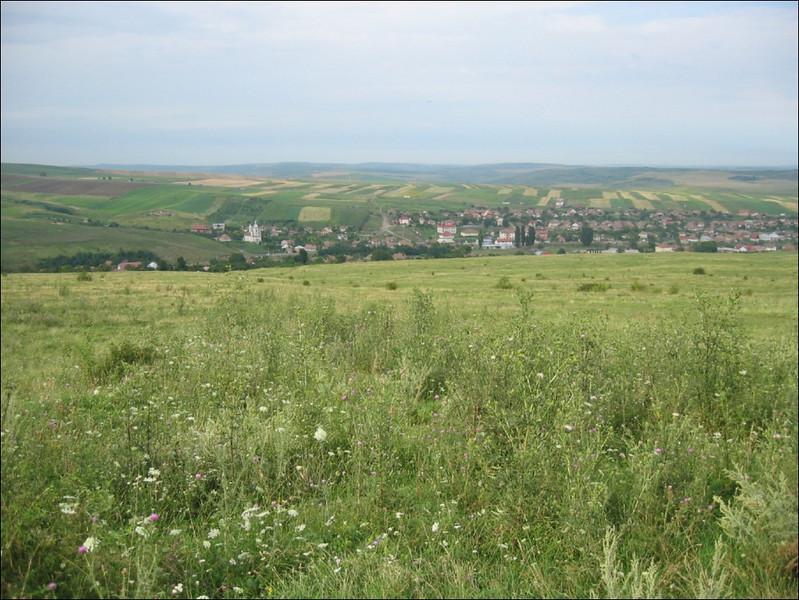 ruderal terrain