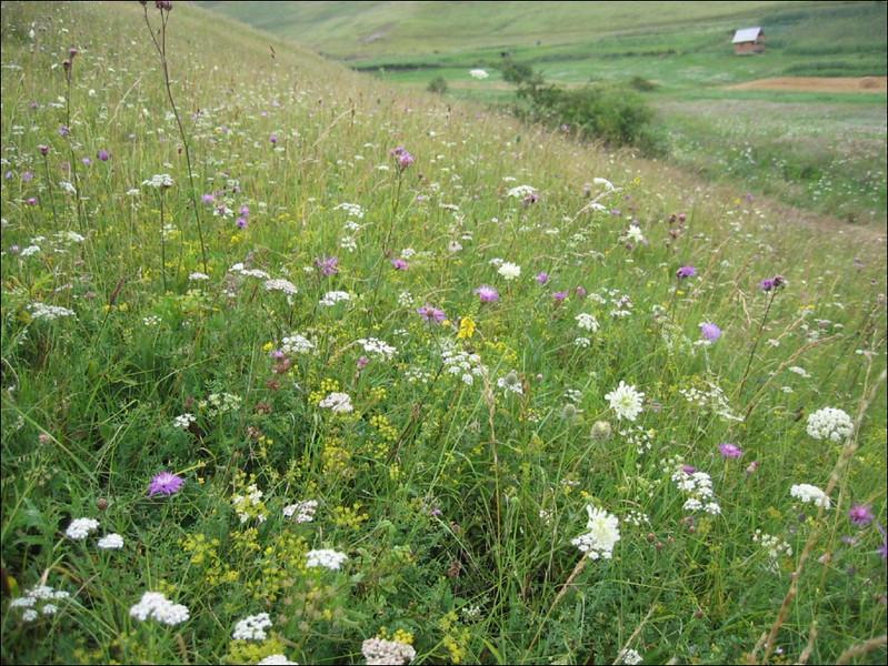 flower meadow habitat