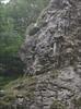 habitat of saxifraga marginata