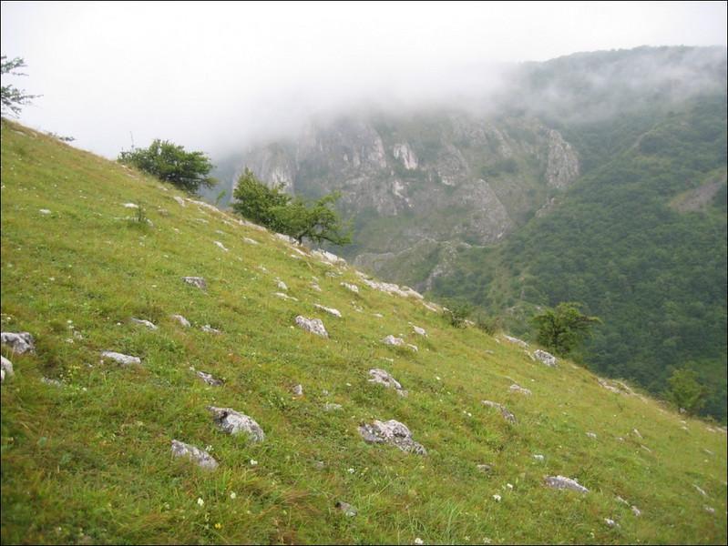 habitat (near Turzii gorge)