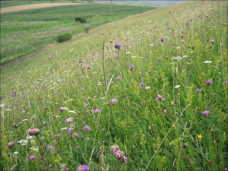 meadow habitat