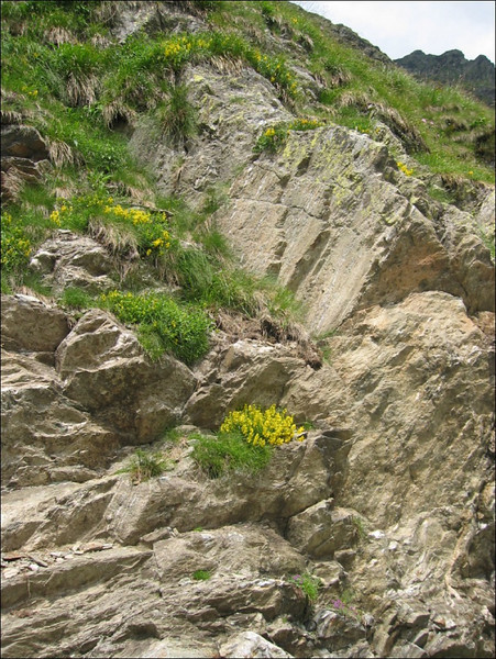 habitat of Genista spec.