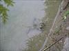 habitat with Bombina variegata, Yellow-bellied toad, (NL: geelbuikpad)