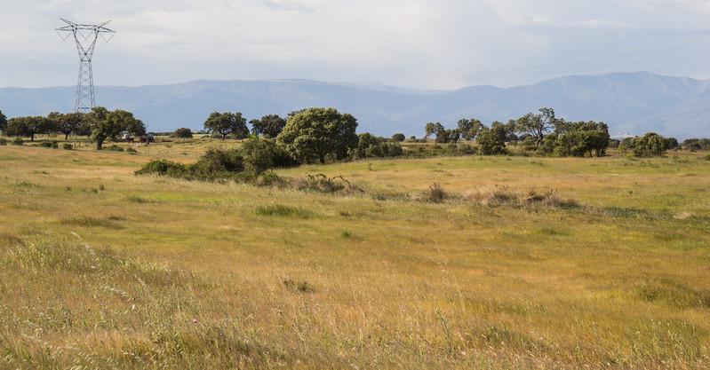 Habitat of Elanus caeruleus